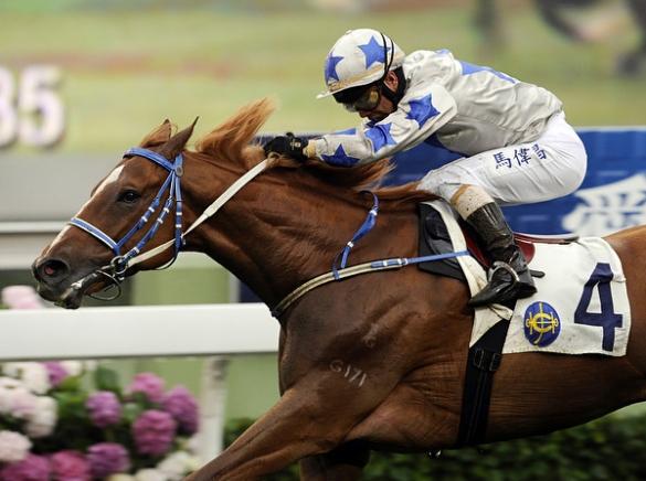 Victor_Fraile_Portfolio_Portfolio_Horse_Photographer_Hong_Kong_81