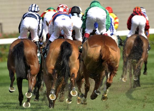 Victor_Fraile_Portfolio_Portfolio_Horse_Photographer_Hong_Kong_84