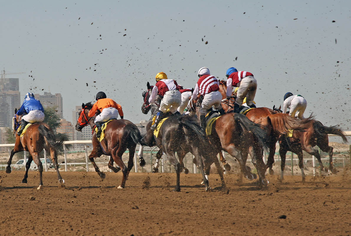 Horses leave the starting gate for Race 2 during the Dubai Racing Carnival held at the Jebel Ali Race Track on February 15, 2008.
