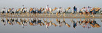 Camels are reflected in pools of water at the Nad Al Sheba race tracks in Dubai, United Arab Emirates, on December 29, 2006.