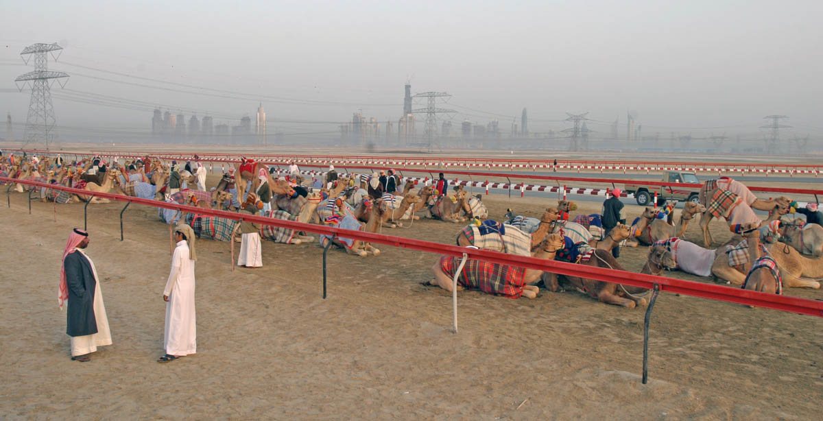 Early morning at the Nad Al Sheba camel tracks in Dubai, UAE, December 29, 2006.