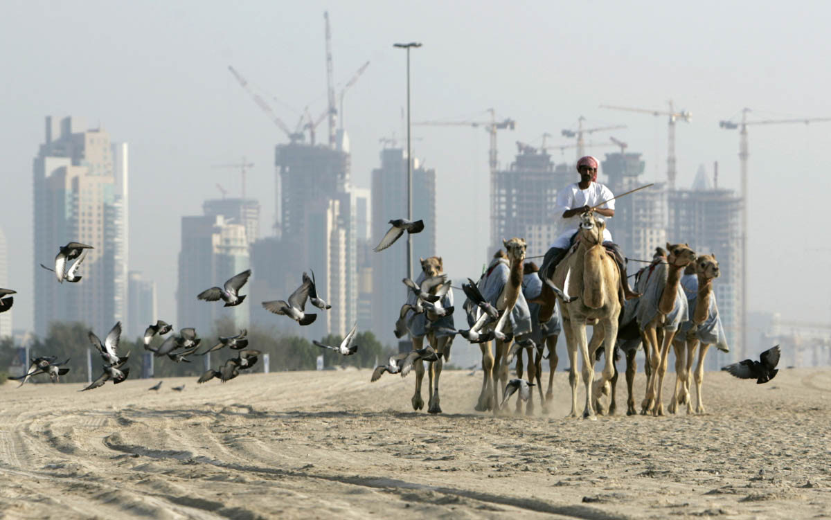 Early morning at the camel tracks in Dubai.