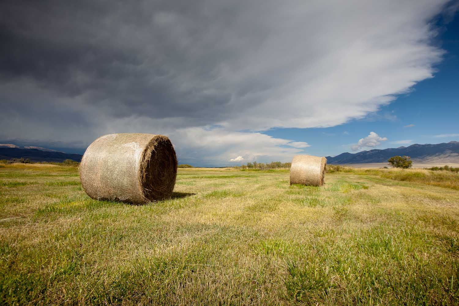 The Big Hole Valley in South West Montana, has some of the finest native pasture and open spaces left in the west.
