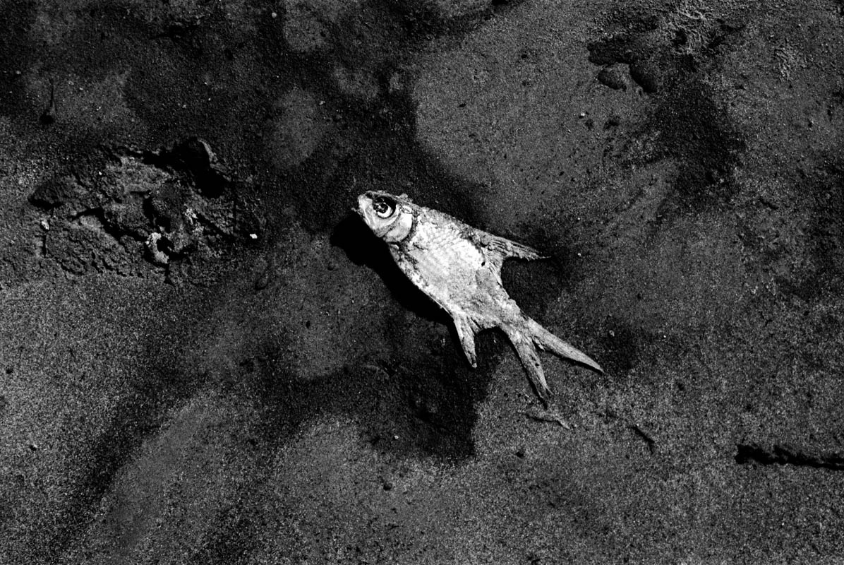 A dead fish on the river shore.