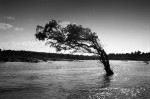 A tree in the Mekong River.