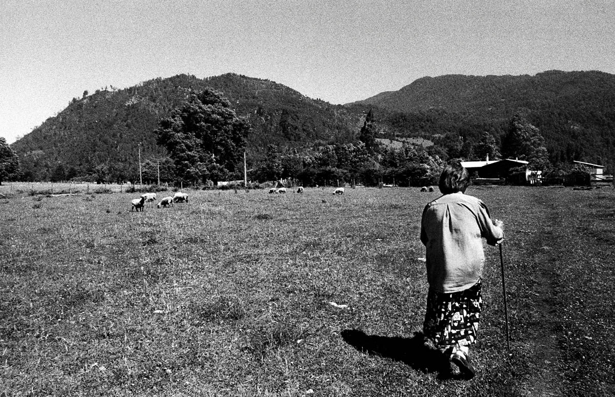 Mrs. Hueicha walking across the fields to her house in Reyehueico. Before the arrival of representatives from Trayenko in the area, the concept of {quote}private property{quote} was not an issue in Liquine. Today most properties are protected by fences to avoid unwanted intruders from the company on their land.