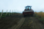 Early morning work in one of the Mafia-confiscated vineyards.