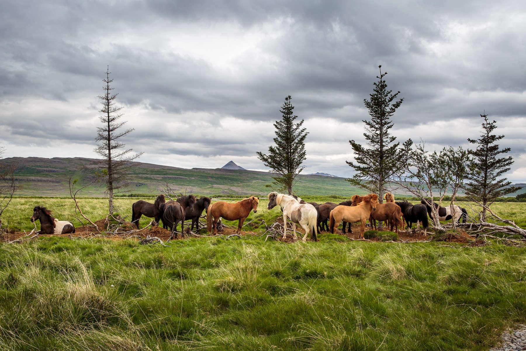 Iceland---McGill017