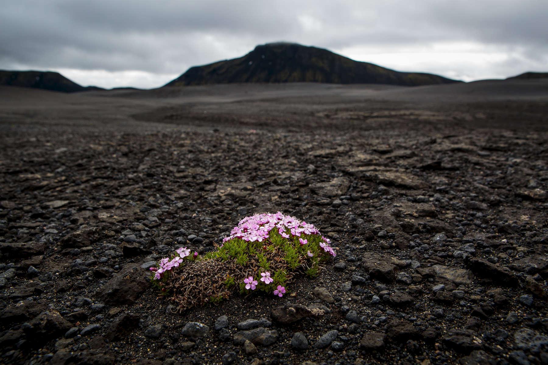 Iceland---McGill027