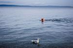 Seattle-Swimmer-1