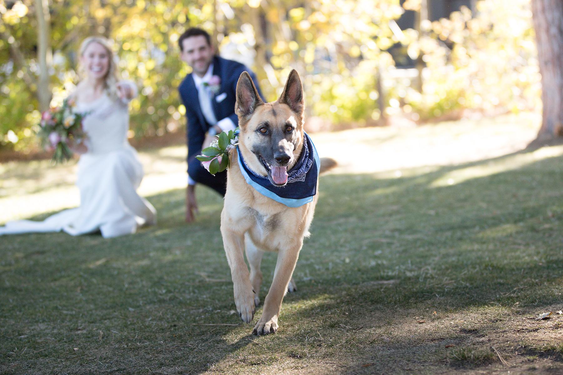beautiful-dog-wedding-Tahoe