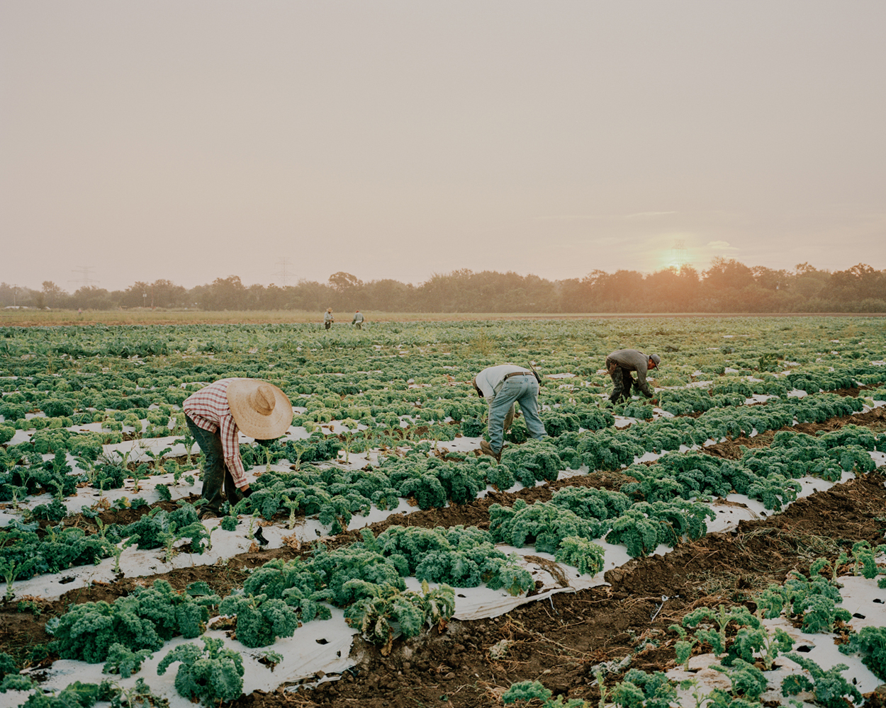 Texas farm workers