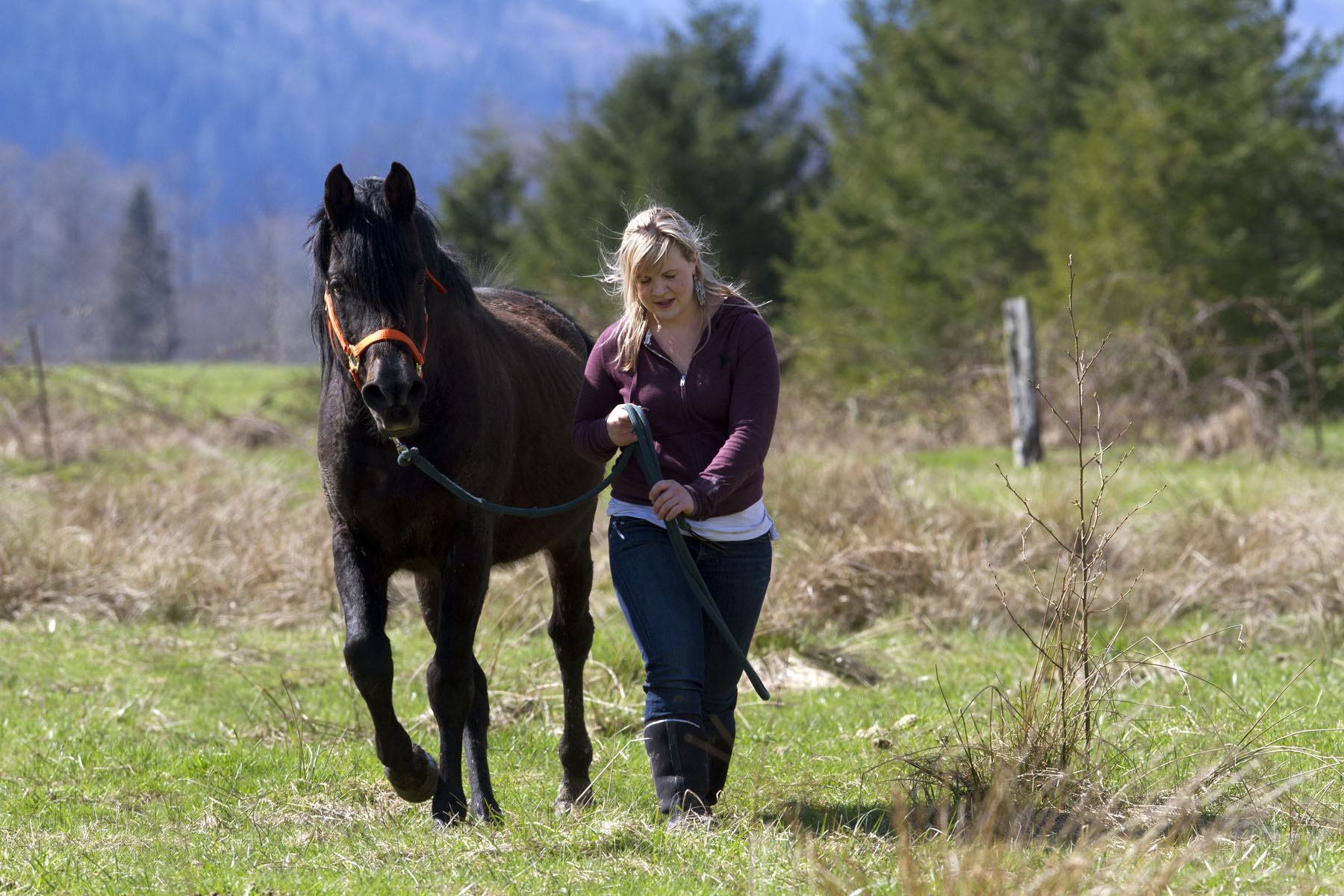 """Alexis Blakey, age 19, from Oso Wash. walks with a stallion on Summer Raffo's farm in Oso, Wash. on April 1, 2014.  Blakey was a friend Raffo and headed to her farm immediately after hearing Raffo was missing after the mudslide on March 22, 2014.  She has been caring for the 16 horses daily since.   """"This was her life,"""" said Blakey.  """"She loved horses and loved caring for them.  I'm really going to miss her."""""""