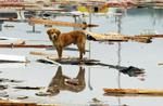 Ducey-photo-dog-tornado-rescue