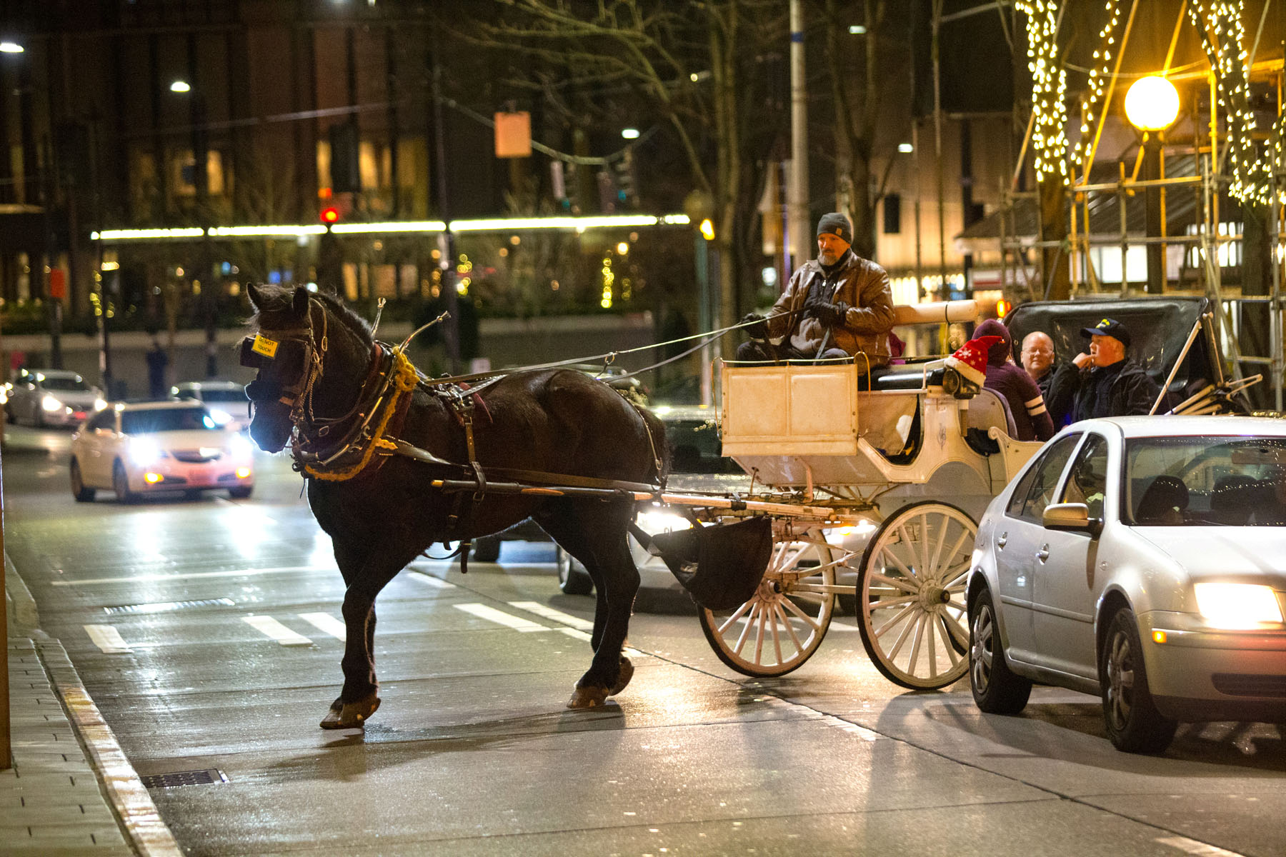 Steve Beckmann, owner of Sealth Horse Carriages, navigates his draft horse, Amos, through city traffic on 5th Avenue in Seattle, WA on December 17, 2017. Beckmann says he was the first horse and carriage business in Seattle and now, 42 years later, he is the only one left. (© Karen Ducey)