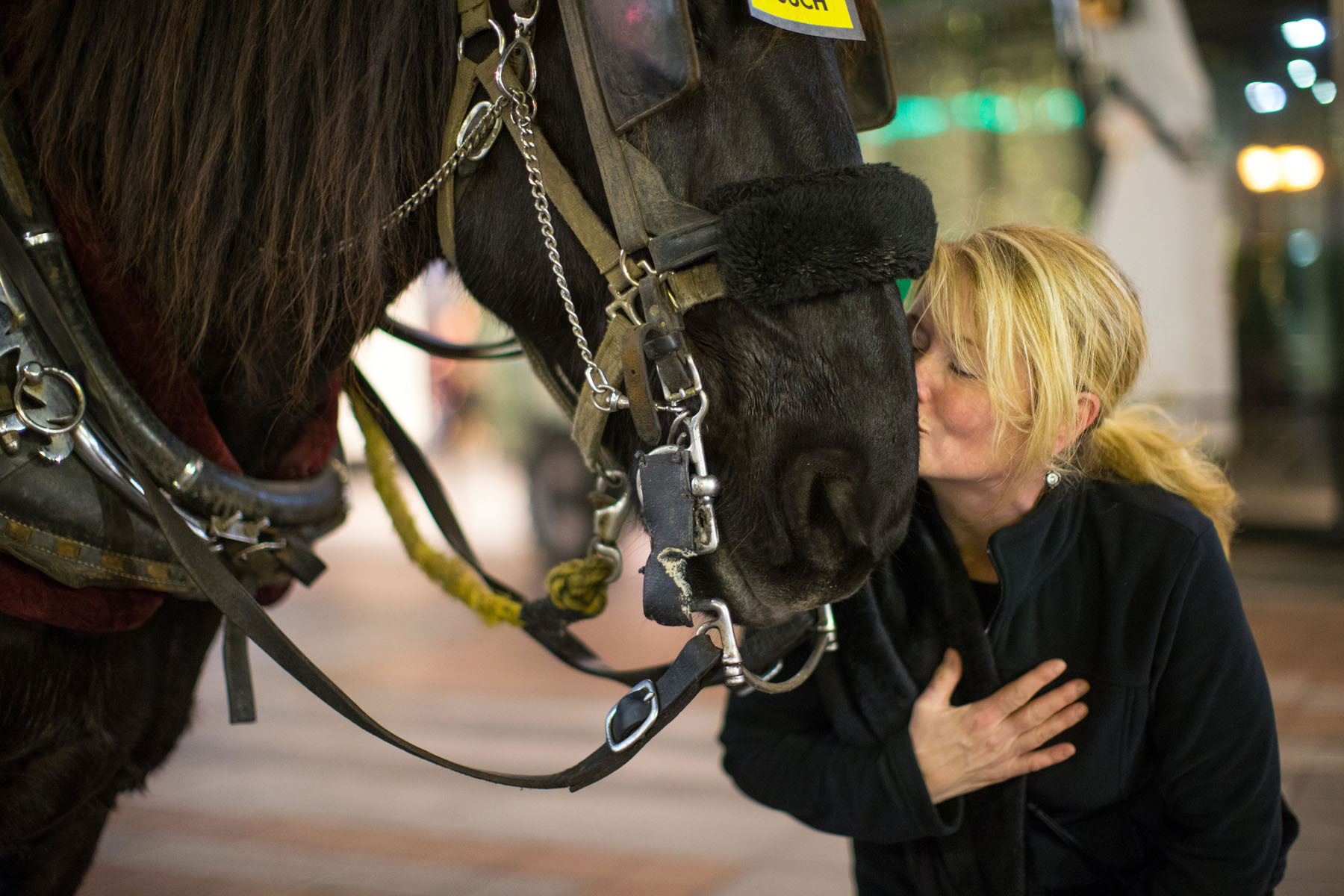 Tanya Therrien of White Rock, British Columbia, Canada give Amos, an 11 year-old Percheron draft horse from Sealth Horse Carriages, a kiss outside Westlake Center in Seattle, WA on December 17, 2017. {quote}I'm so in love with him,{quote} Therrien says.{quote} I want to take him home.{quote}  (© Karen Ducey)