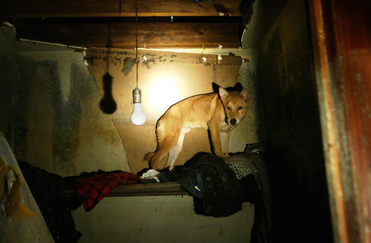 Katrina_Ducey_animal_rescue_03