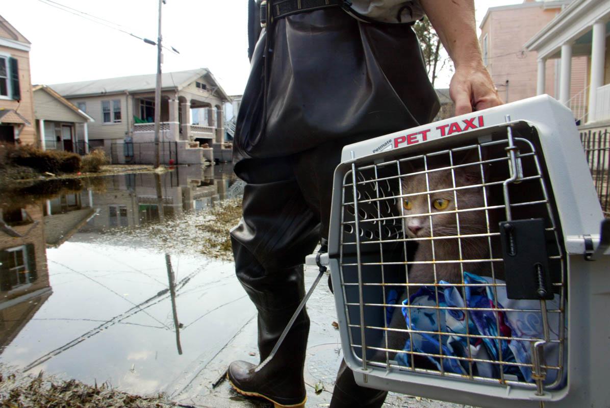 Katrina_Ducey_animal_rescue_08