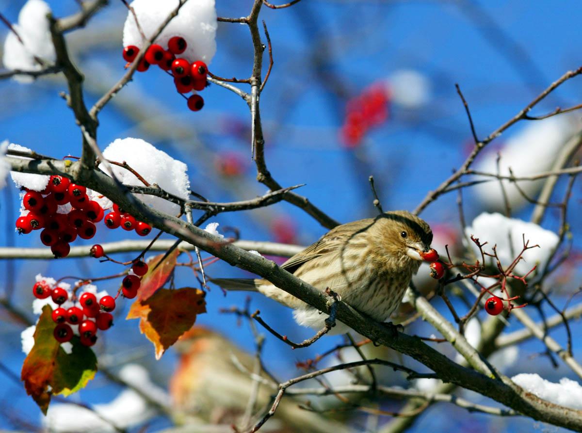 animals-ducey-bird-