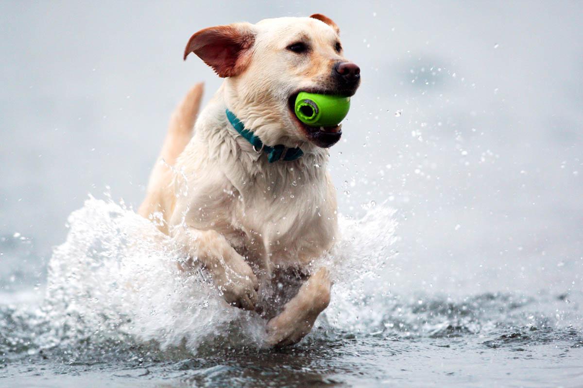 animals-ducey-dog-3