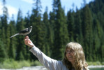 animals-ducey-lifestyle-bird