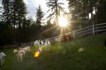animals-ducey-pasaados-2