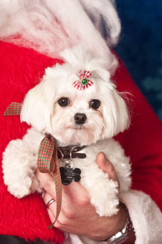 ducey-pet-holiday-020