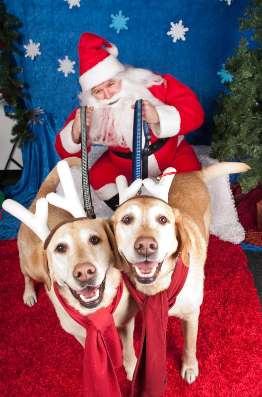 ducey-pet-holiday-021