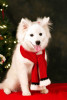 ducey-pet-holiday-022