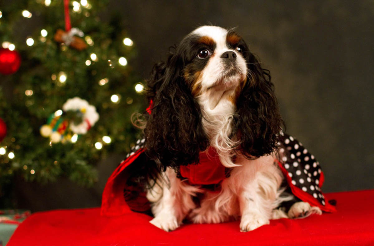 ducey-pet-holiday-024