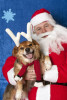 ducey-pets-holiday-07