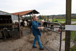 Kelli Estrella closes a gate at the Estrella Family Creamery in Montesano,Wash.  on November 4, 2010.  {quote}I'd like to get back up and get going again.{quote} she says regarding the Food and Drug Administration ordering them to stop processing cheeses after it found listeria bacteria on some of the cheeses this year.  The family says they have made many renovations on the farm and the bacteria is only found on the soft cheese, not everything.  They believe they should be allowed to resume making cheese and sell the hard cheeses they have already made at the facility.  The creamery is one of Washington's most famous artisan cheesemakers.  (photo credit Karen Ducey)