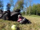 pets_lifestyle_ducey_gracie