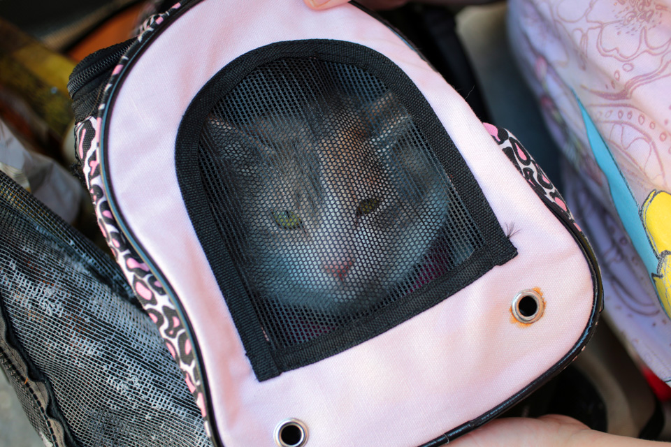 Isabella, a one-and-a-half year-old cat zipped in a pet carrier inside a stroller, waits in line to be seen by a veterinarian with her owner Victoria Lipska at the Doney Memorial Pet Clinic. Lipska, currently living with her mother, is thrilled the clinic provided her with the stroller. She is visiting the clinic to get Isabella's nails trimmed and comes here as often as she can.  (photo © Karen Ducey Photography)Homeless and low income people bring in their pets to see veterinarians and pick up food at the Doney Memorial Pet Clinic located in the Union Gospel Mission in Seattle, WA on June 25, 2016. (photo © Karen Ducey Photography)