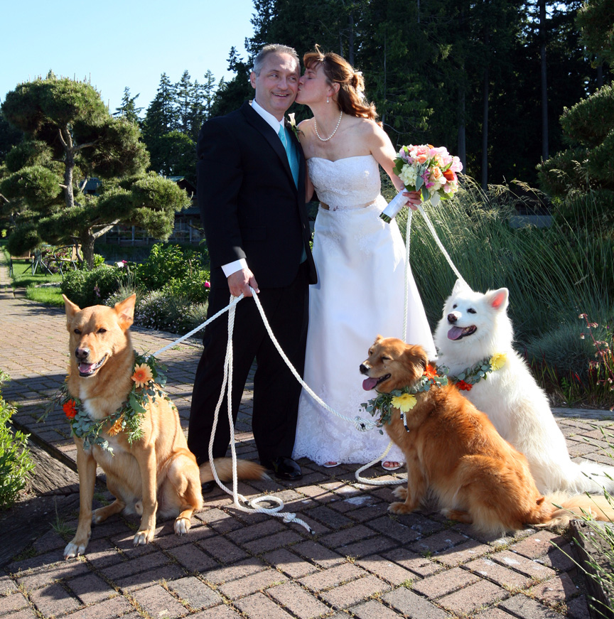wedding-dogs-ducey-12