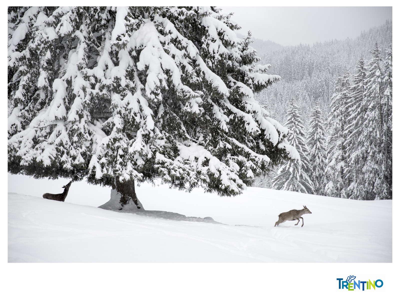 Trentino_Corporate03