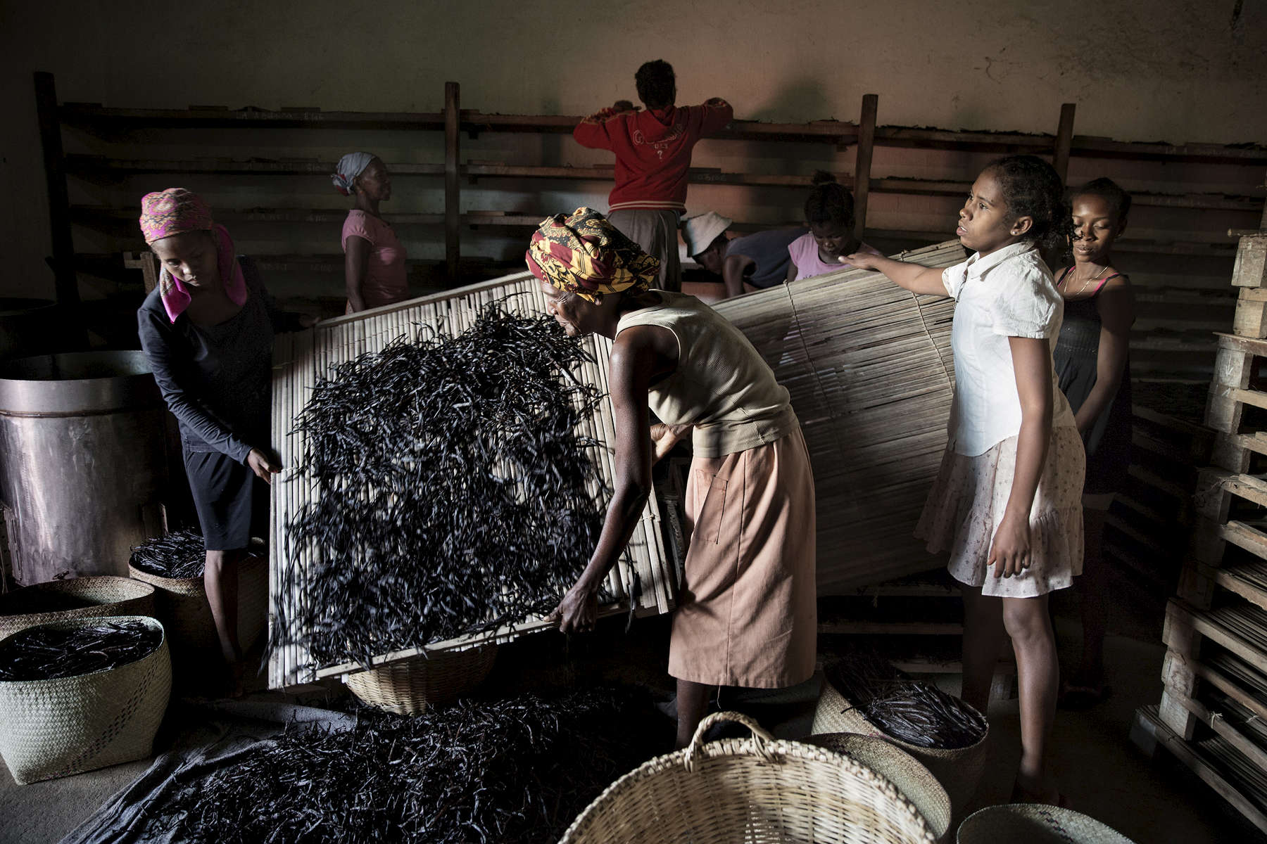 Near Ambanja, the French company Biolandes, the world leader in natural flavors, selects vanilla beans that will be transformed into natural essences, especially for perfumery and cosmetics.
