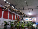 Samson, the world's 3rd most complete T-Rex fossil.We designed his environment and a party in his honor for Green Hills Software.