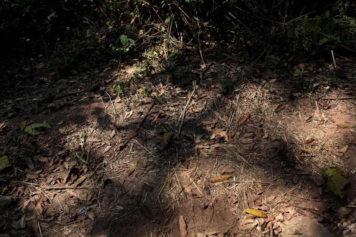 the Panther hill.just outside the presidential house in camp de roux,every night for many days,people saw seleka cars with people inside going up full of people and coming down empty.more than 50 people have been killed. a mass grave have been found few weeks ago .