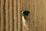 Grain Harvest, Central Montana