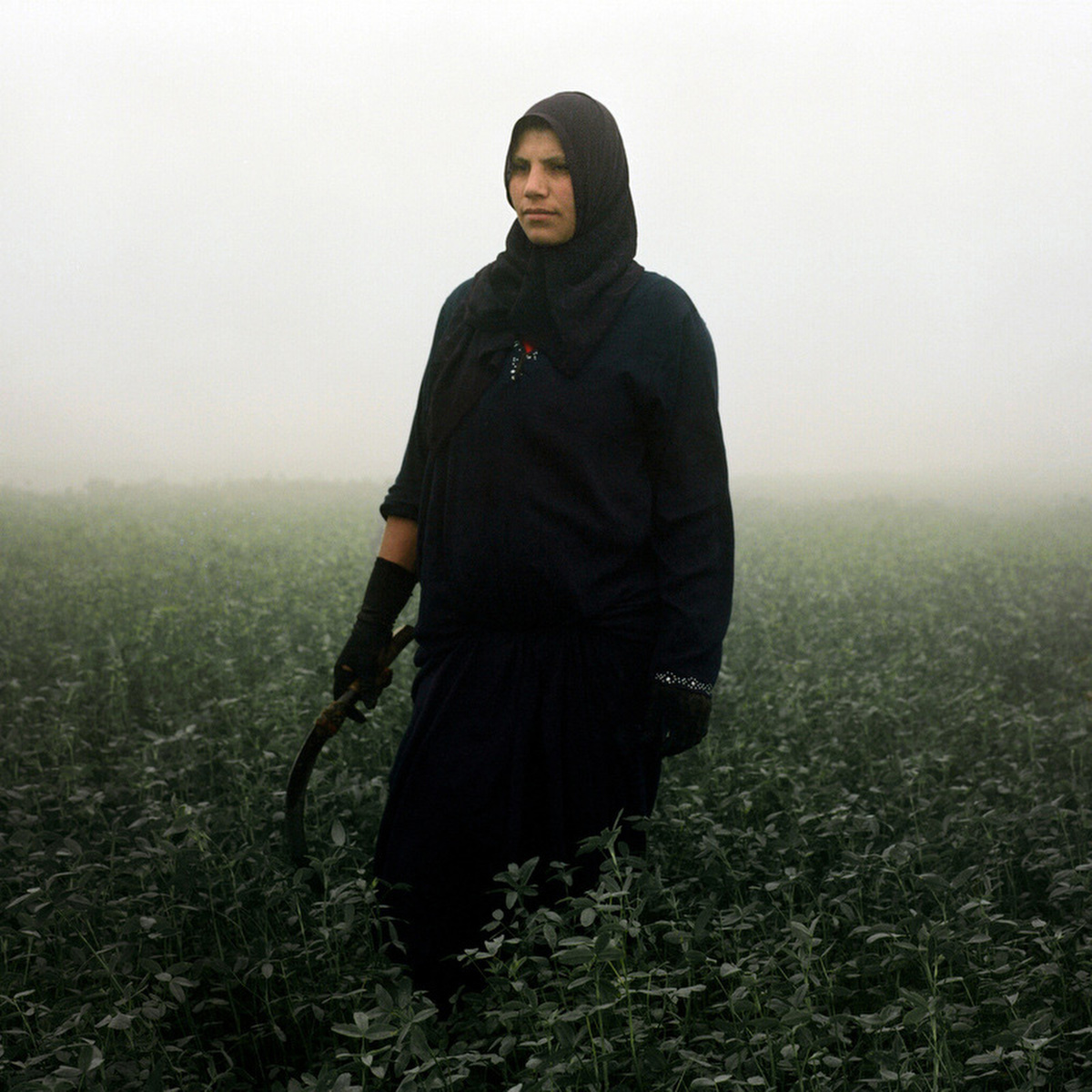 Hameeda, a mother and a farmer, removes weeds from a plot of land in the early morning hours. She gets paid 25 Egyptian pounds for a day's work (US$3.6).