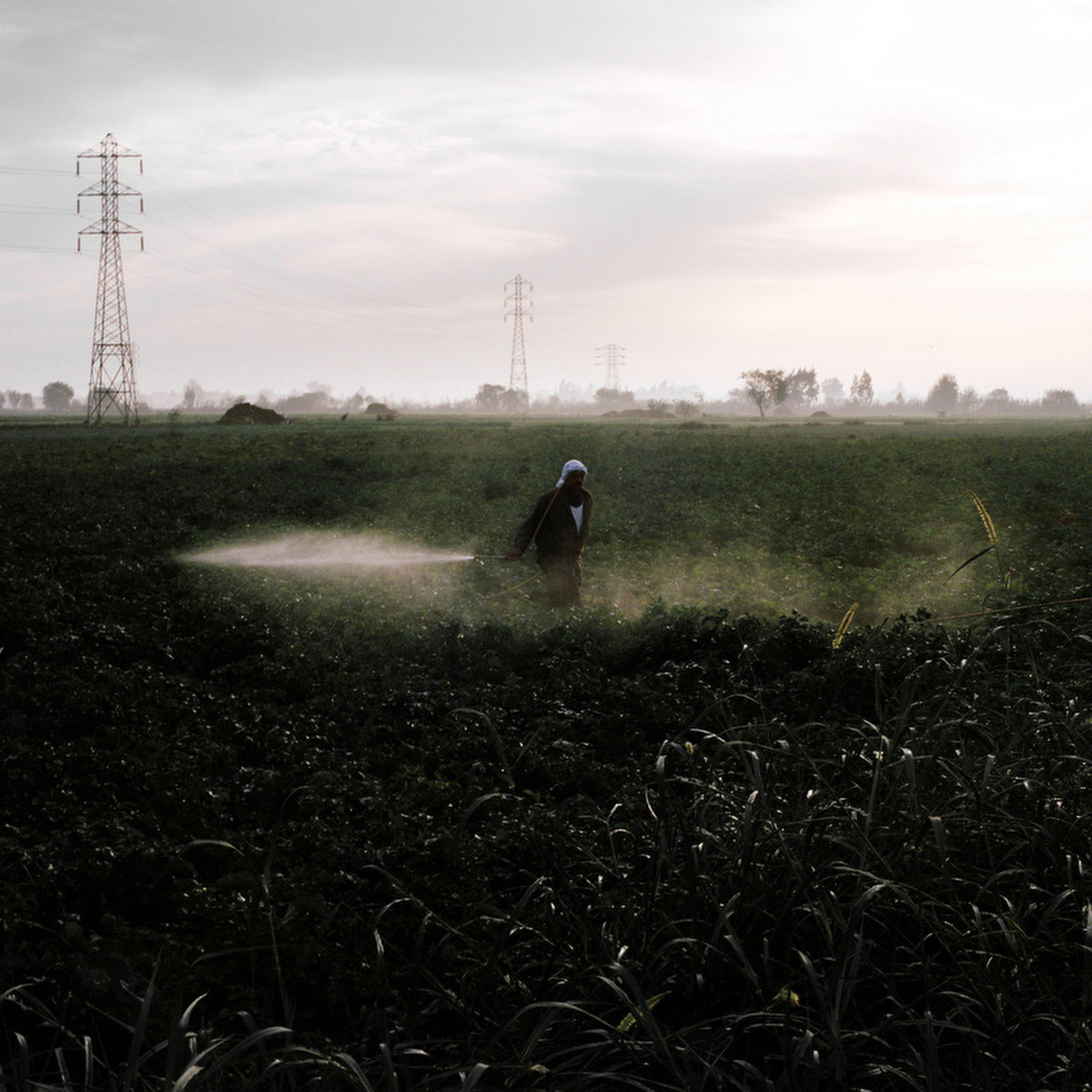 A farmer sprays water on a field at sunrise.