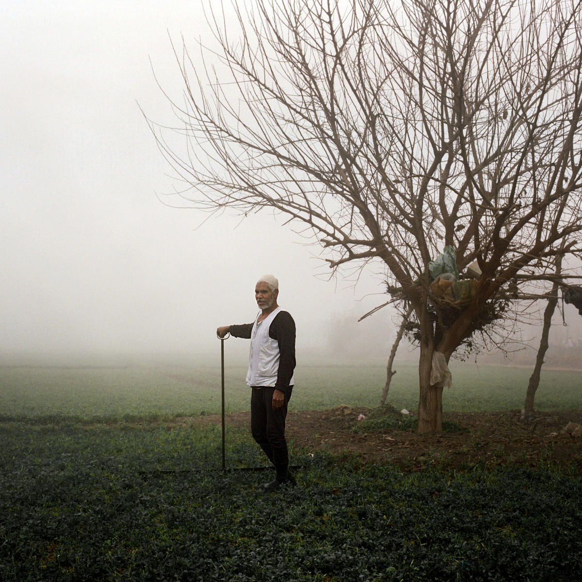 Alone, Alsayed Nasir, 67, manually grazed his field at sunrise.