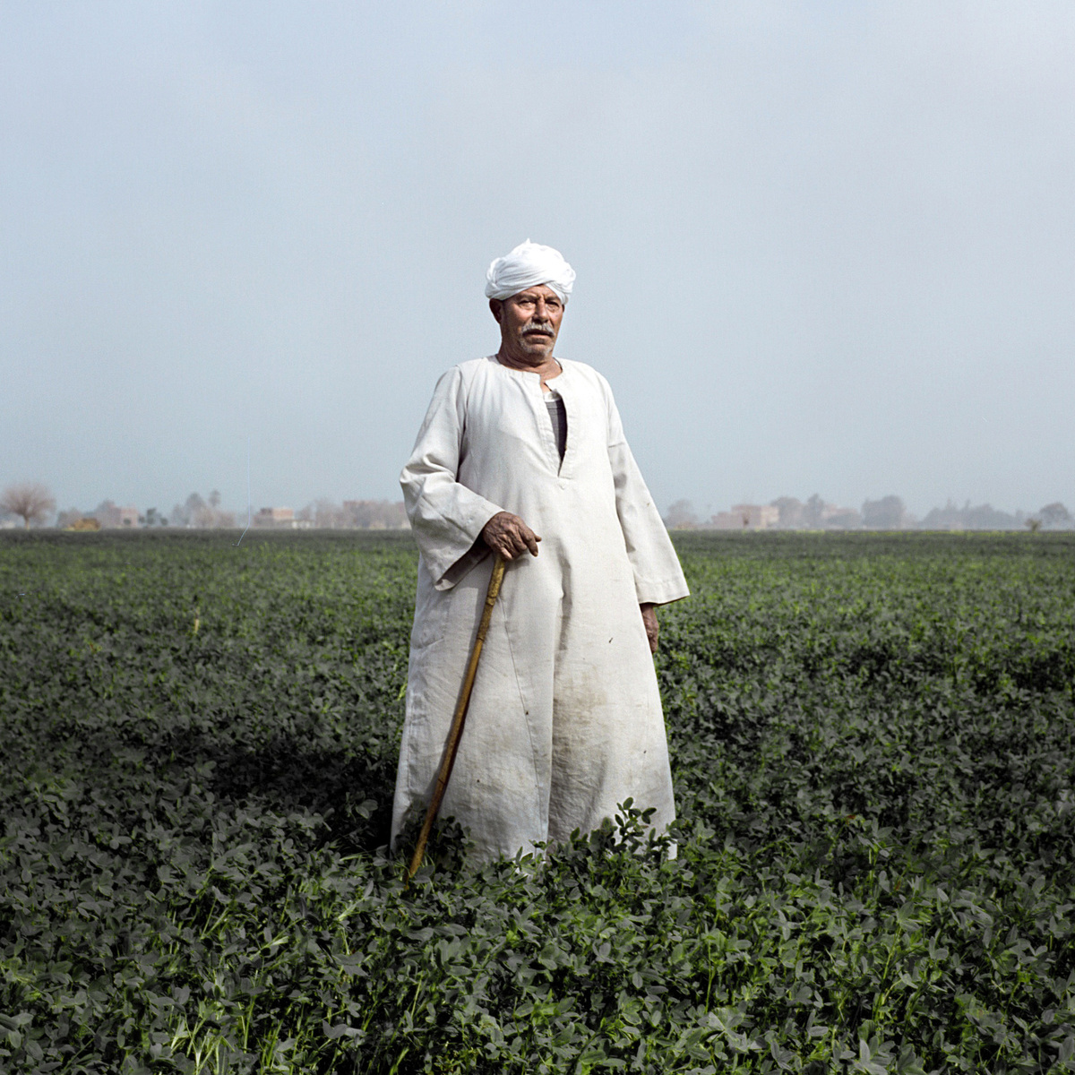 Mohamed Abdelfattah Ismail, 71, a farmer his whole life. His children have now taken over farming the family's land.