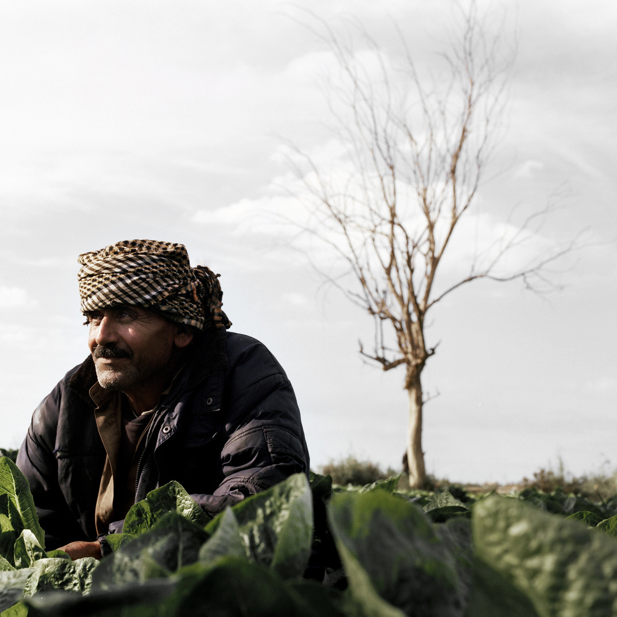 A farmer takes a break from working in a lettus field.