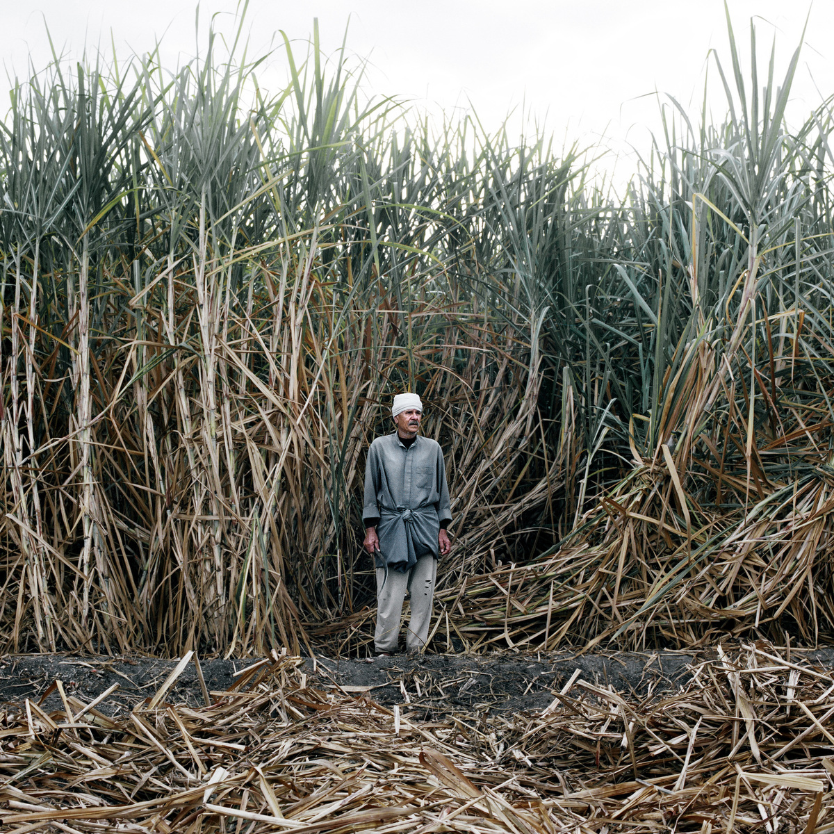 A farmer stands in a field.