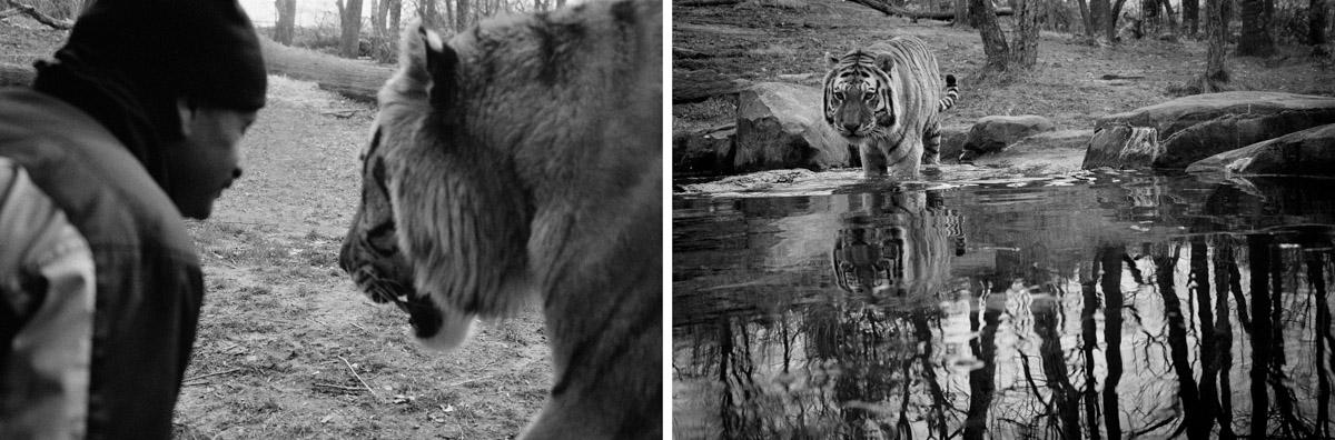 wildlife_17