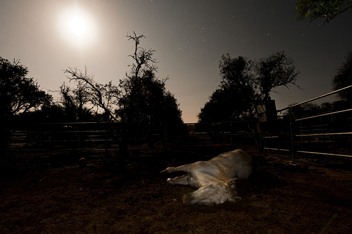 A rescued horse named Amigo is resting under the full moon at the California Coastal Horse Rescue in Ojai, Calif., on Friday, May 20, 2011.