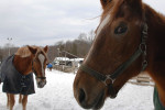 January 15 - Sweet Hills Stables, Melville, NY