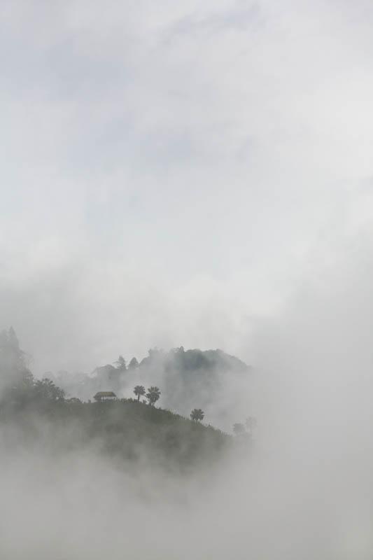Reveal, Nagaland, India